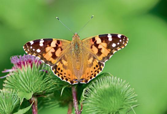Pin by Marianne Pearson on butterflies Butterfly wedding