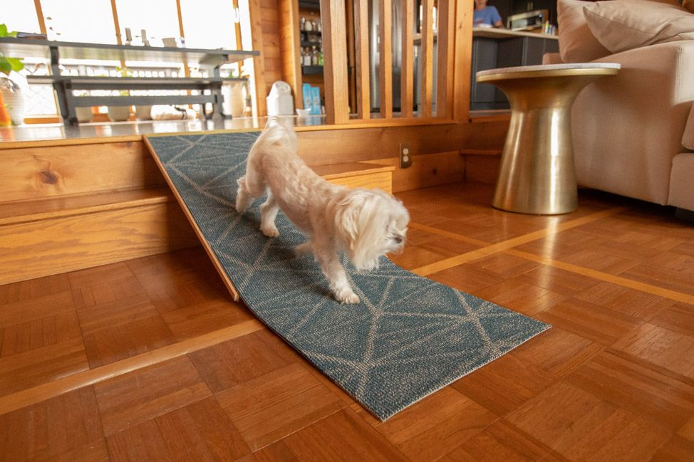 Diy project how to build a dog ramp for 30 in 2020 dog