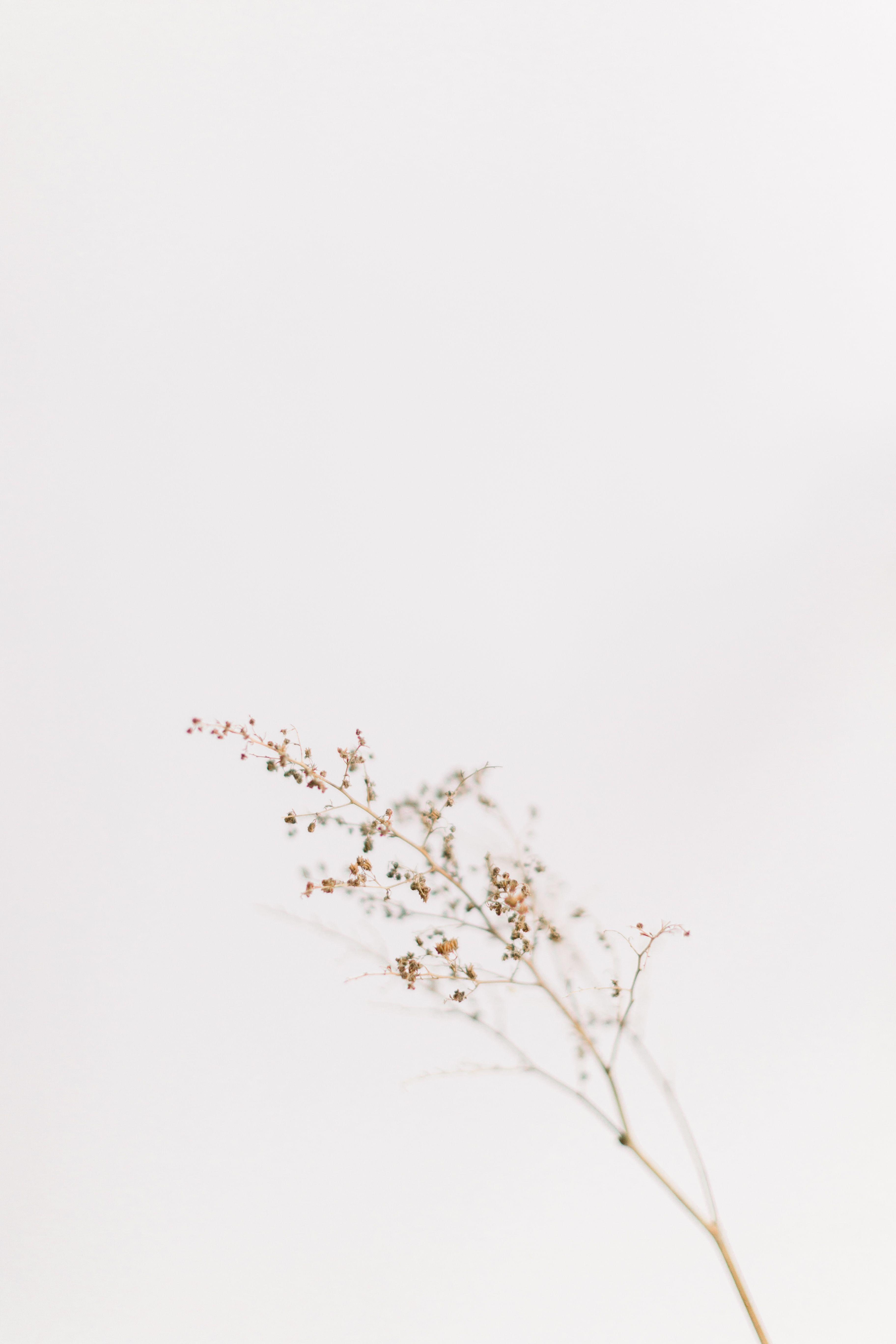 In The Studio Faintfloral Vintage Flowers Wallpaper Dark Wallpaper Iphone Iphone Background Wallpaper