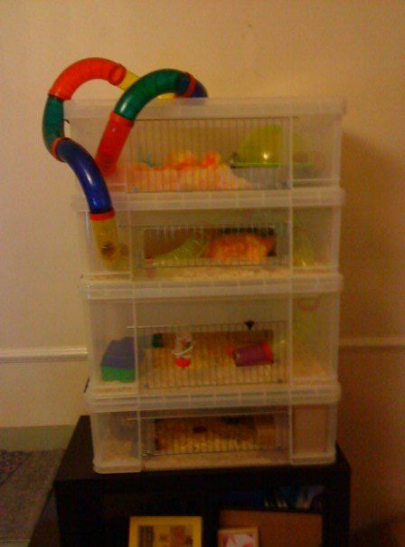 This is not a good idea there is not enough air for Diy hamster bin cage