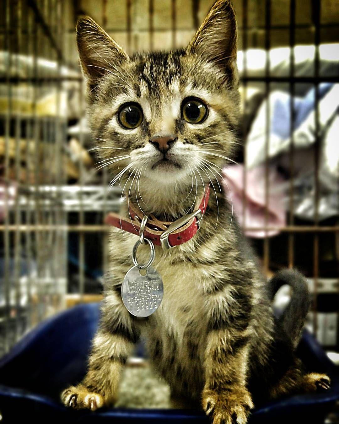 kitten kittenseason2017 rescue nurture adopt