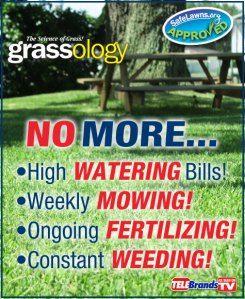Grassology Reviews Grass Seed Grass Low Maintenance