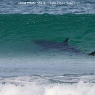 Great White Shark In Wave This Is My Worst Fear In The