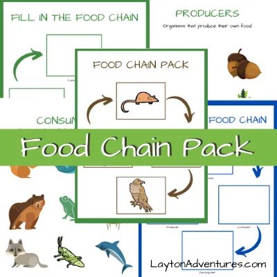 Food Chain Worksheet & Pack in 2020 (With images) Food