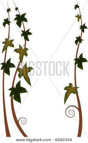 ivy | Stock vector