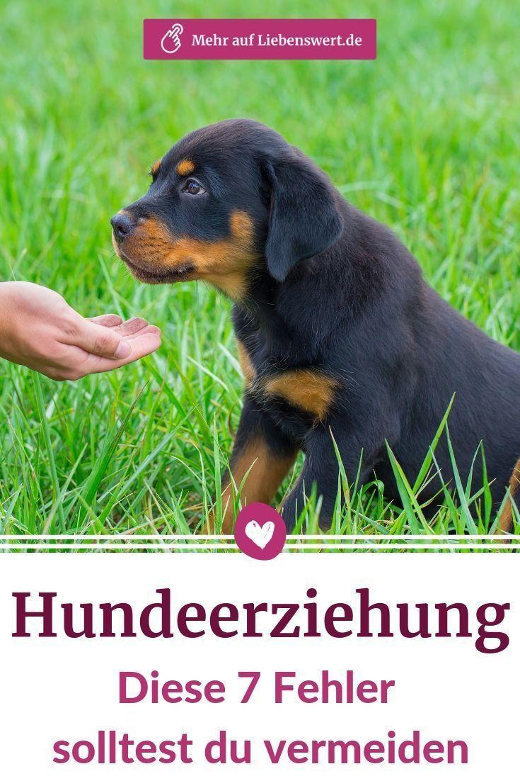 Hundeerziehung Diese 7 Fehler Sollten Sie Vermeiden Liebenswert In 2020 Hundeerziehung Hundchen Training Hunde Welpen Erziehung