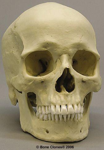 Analysis of Skeletal Remains | worksheet on the big 4 ...