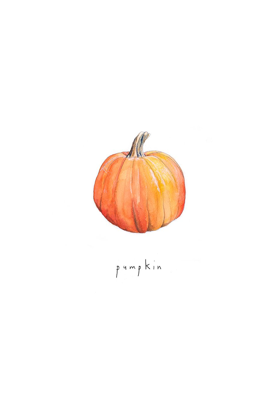 Pumpkin illustration by Aisling Teevan, watercolour and coloured pencil #octoberwallpaperiphone