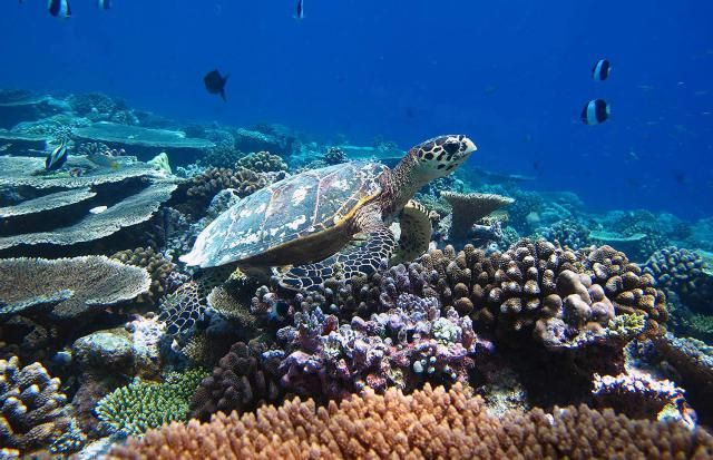A sea turtle in the Maldives - monthly travel ideas