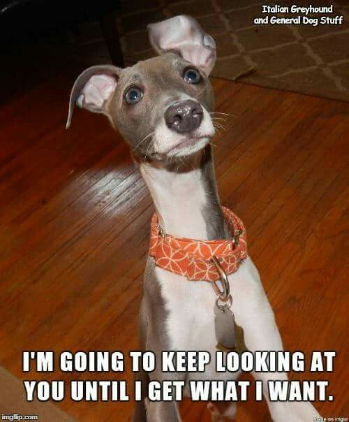 Pin By Emma Dempsey On Dogs Dog Expressions Dog Qoutes Cute Dogs