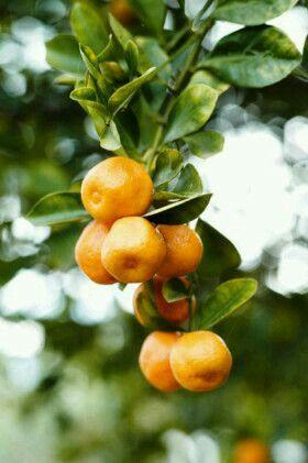 Ideia por Melpo Siouti em Orange Grove | Frutas, Refresco ...