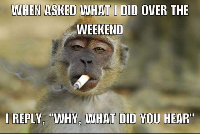 When Asked What I Did Over The Weekend I Reply Why What Did You Hear Steemit What Do You Hear Weekend Humor Monkeys Funny