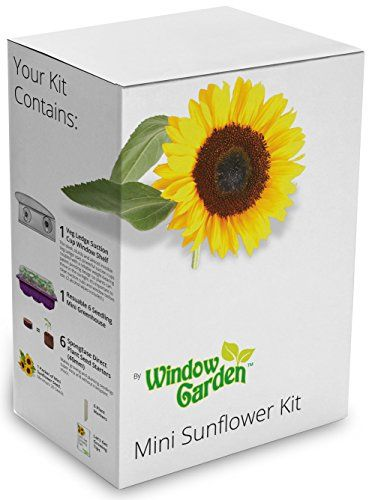Window Garden Mini Sunflower Kit Shopswell Mini Sunflowers Garden Windows Sunflower