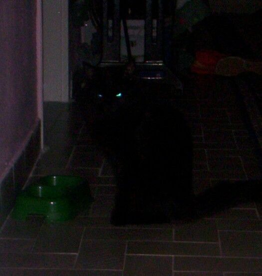 Black cat in the Darkness... Only eyes
