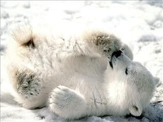 #White #TeddyBear