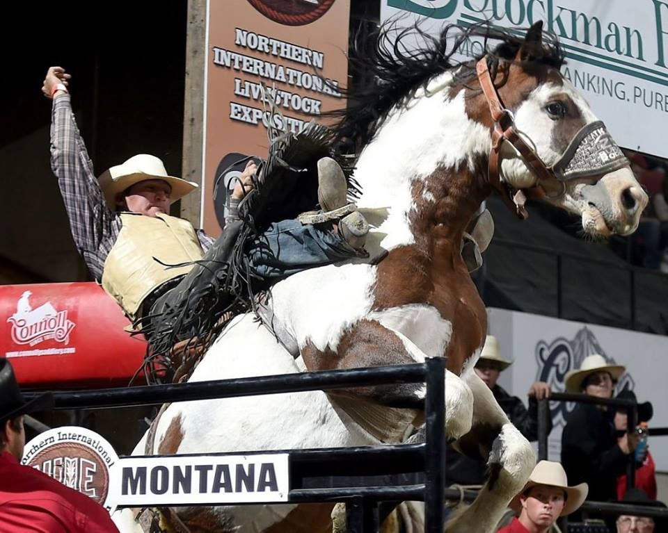 """Dustin Sippola on """"Lunatic Fringe"""", Billings, Montana during the Northern International Livestock Exposition rodeo. (Facebook share by Tooke Bucking Horses.)"""