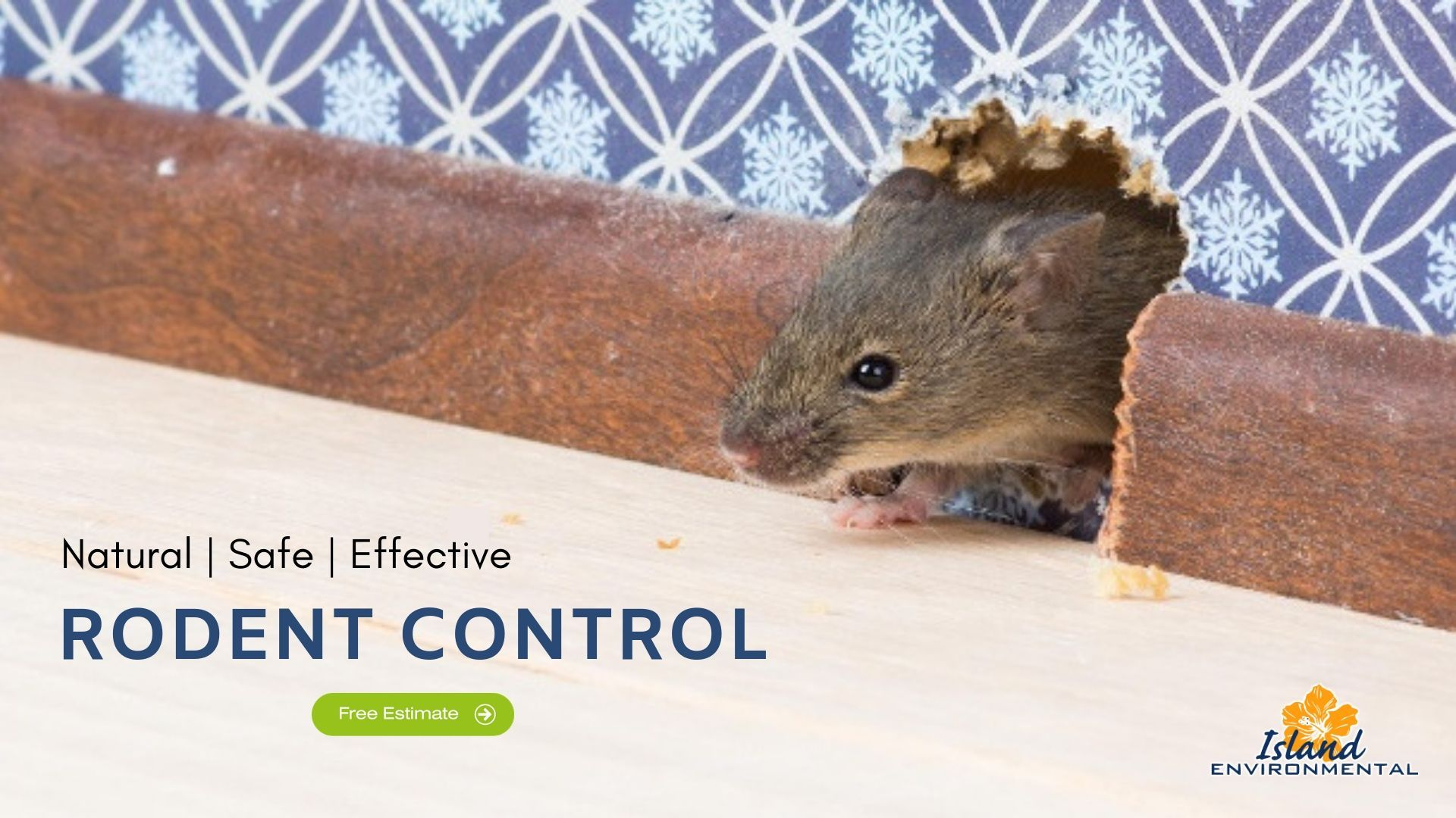 Guaranteed Rodent Removal Services Rodent Control Rodents Rodent Infestation