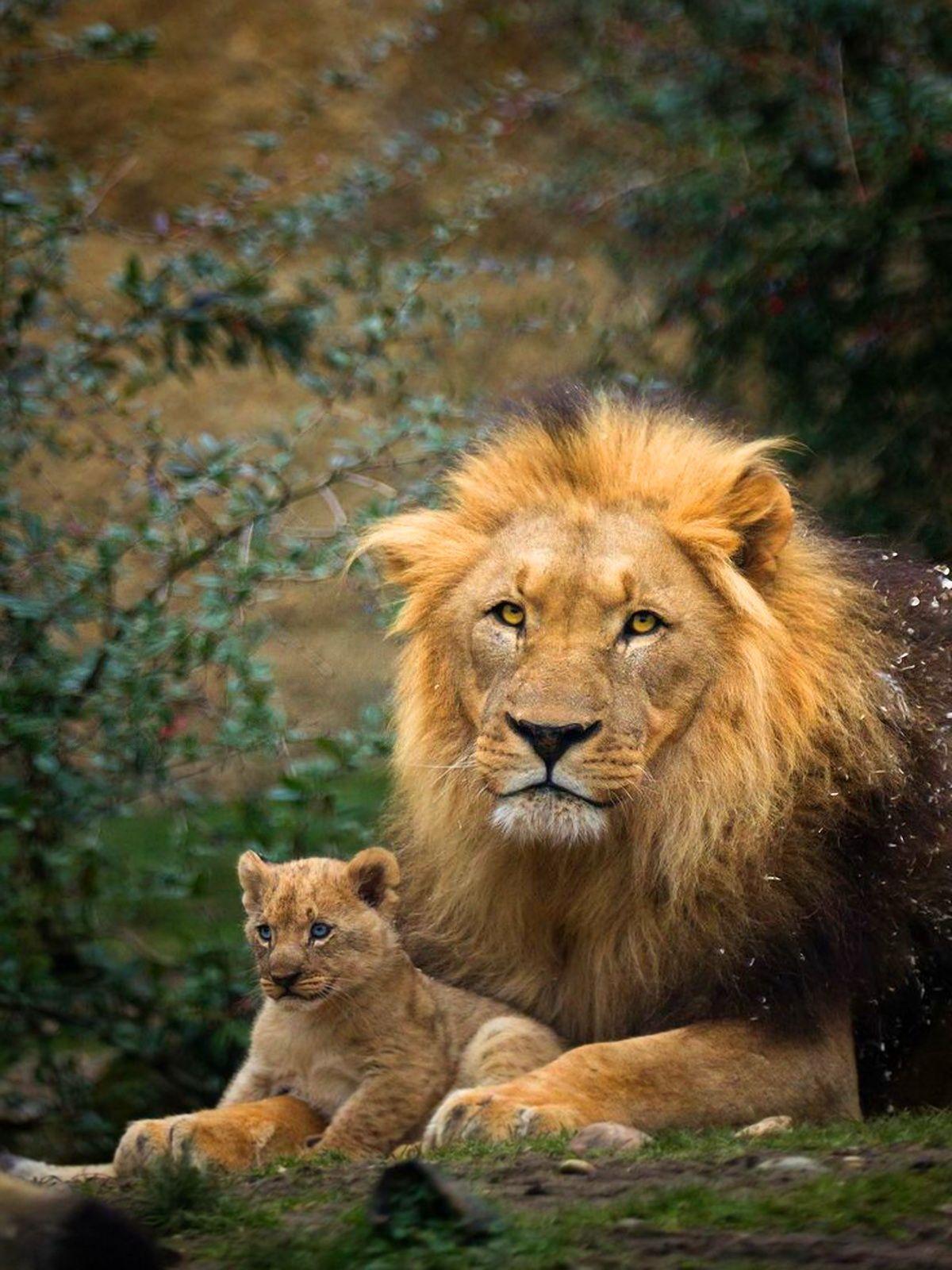 Ausmalbilder Von Süßen Katzen : Pin Von Khaled Alabbade Auf Animals Pinterest