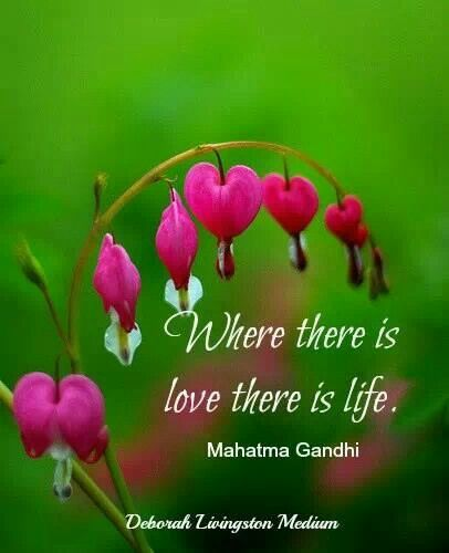 Pin By Windy Ordenana On Quotes Inpirational Happy Bleeding Heart Flower Bleeding Heart Flower Essences