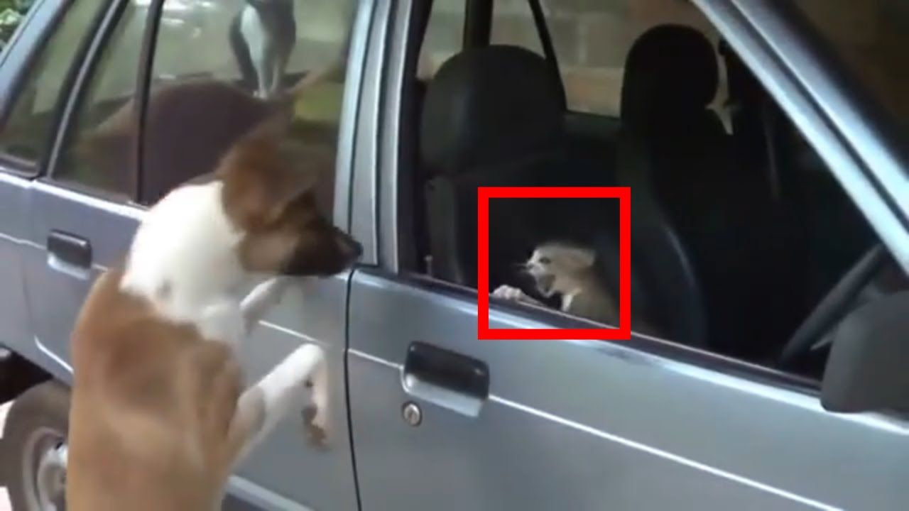 Video Very funny cat and dog cat vs dog new 2017
