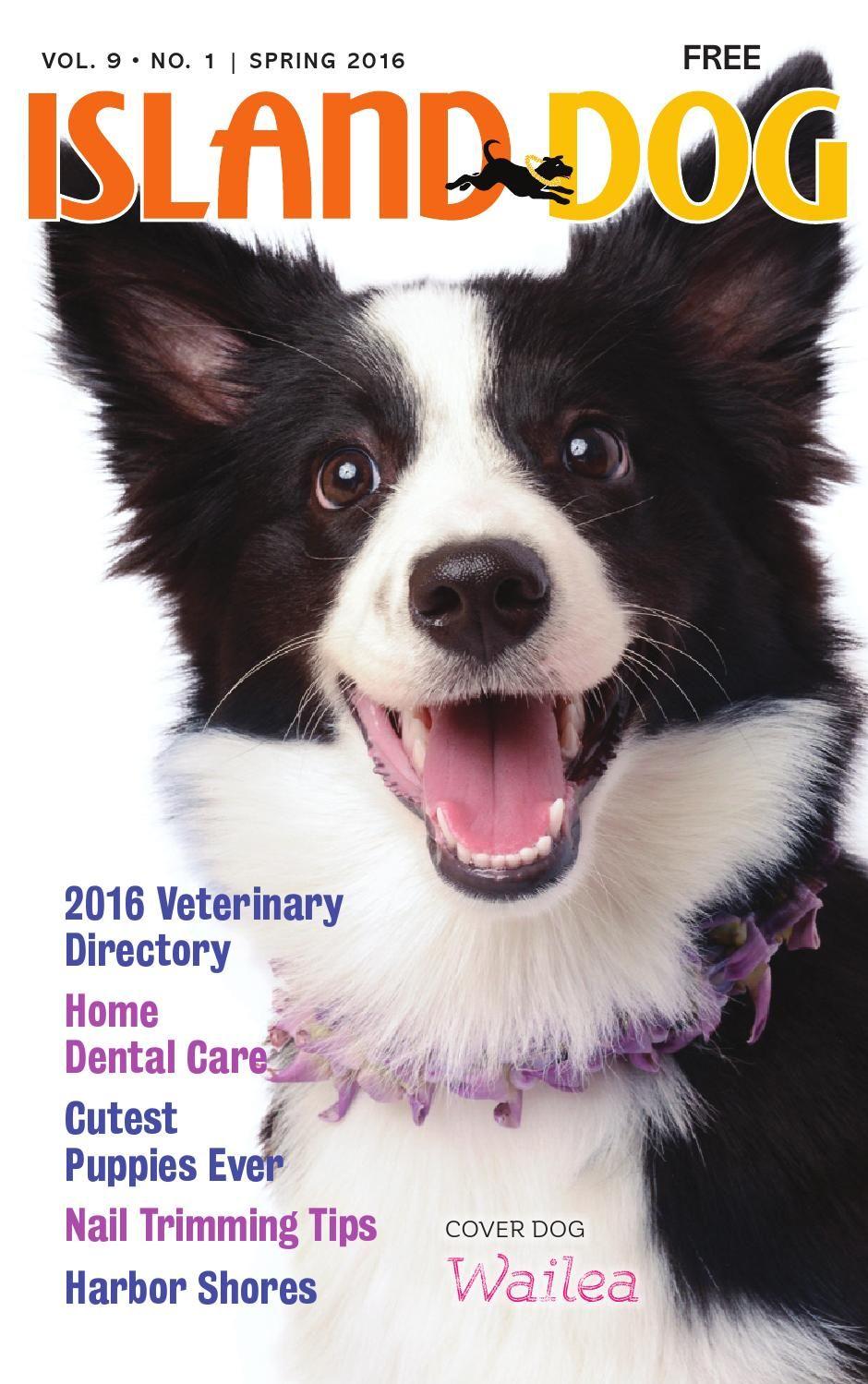 Island Dog Magazine Spring 2016 Dog Magazine Cutest Puppy Ever Pet Magazine
