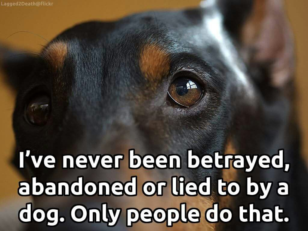 Pin By Betty Piazzola Macdonald On Animal Lover Quotes Dogs Dog Quotes Therapy Dogs
