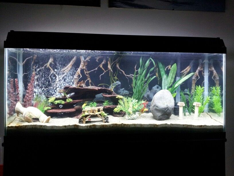 My 55 gallon african cichlid tank aquascapes and for 55 gallon fish tank