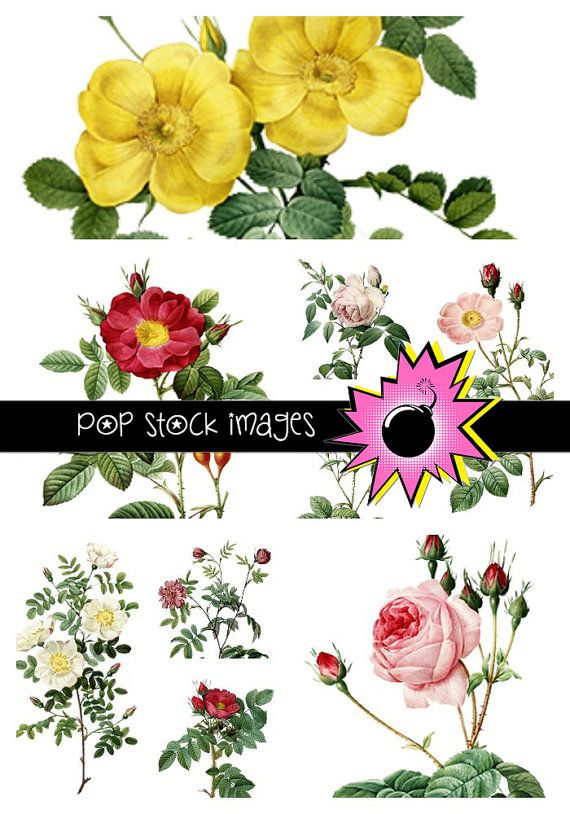 Roses Digital Clipart Collection - 20 Roses Digital Clip Art - Digital Images for Altered Art, Digital Scrapbooking - Printable Roses Images