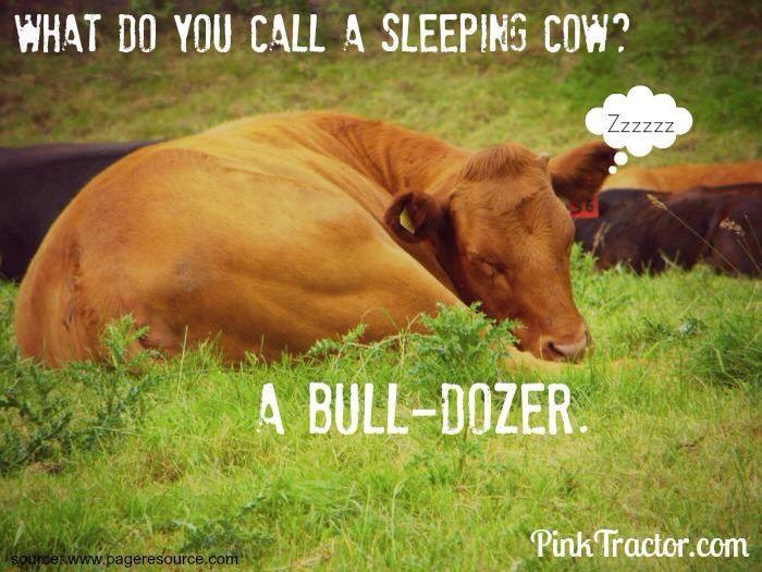 cow joke i love cows pinterest cow farm jokes and humour. Black Bedroom Furniture Sets. Home Design Ideas