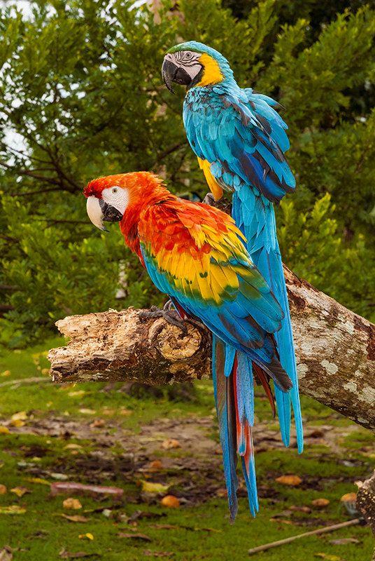Birds On The Amazon River Parrots Rainforest Marshland Wild