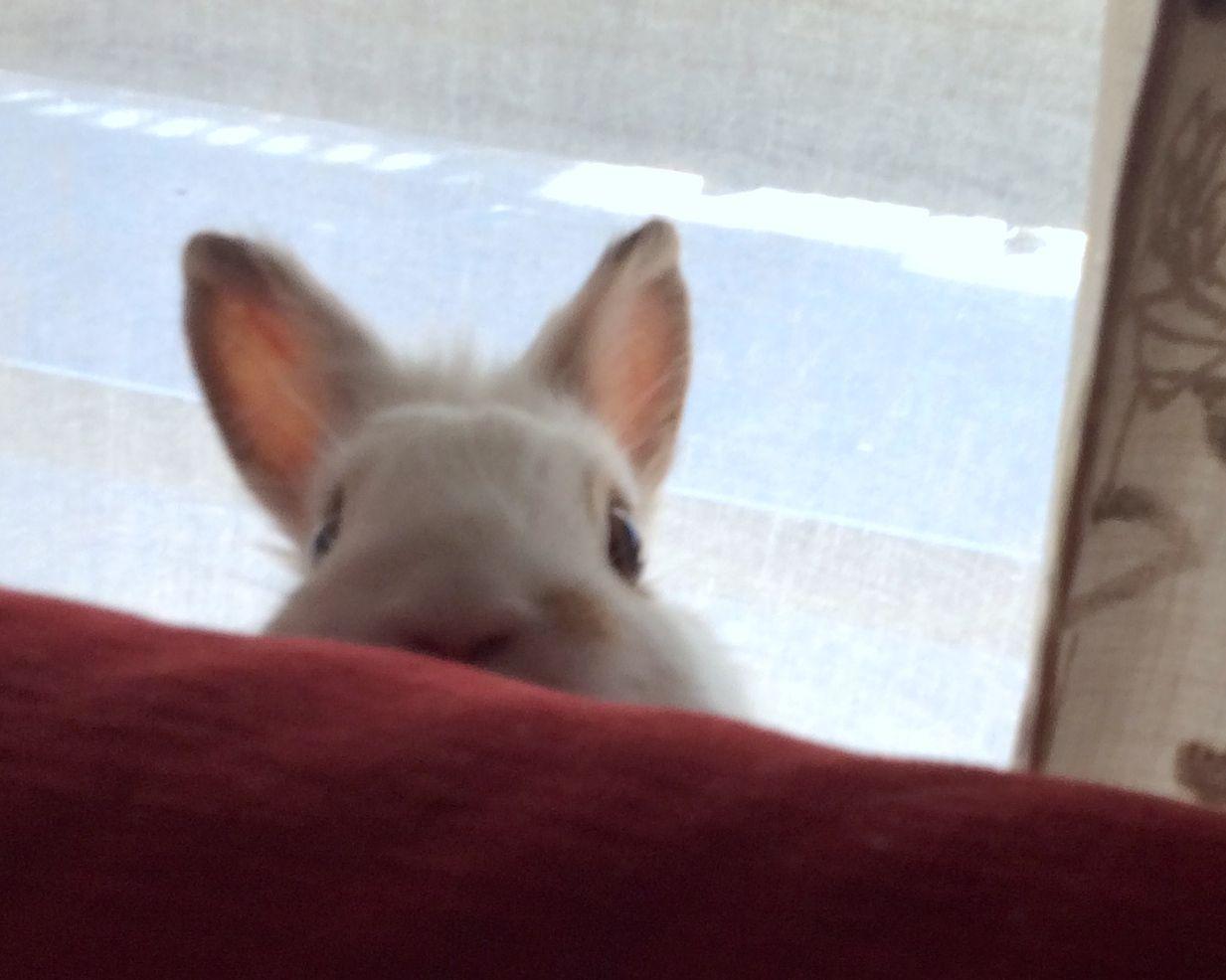 Un conejo muy curioso...