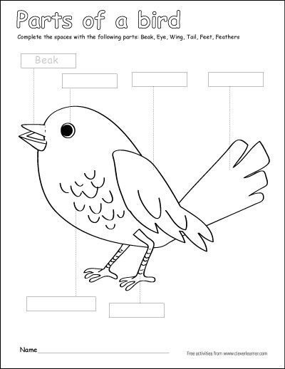 Label and color the parts of a bird. A free color activity