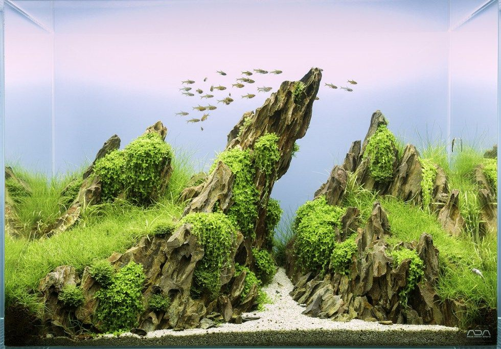 Dragon Stone | Aquarium landscape, Nature aquarium ...