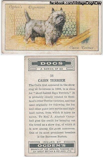 Cairn Terrier Origin Cairn Terrier Terrier Terrier Dogs