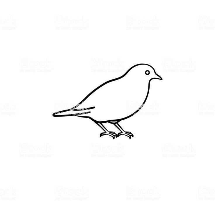 vogel gezeichnet  vögel zeichnen vogel skizze vintage