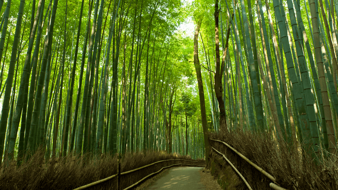 Bamboo forest in Kyoto's Arashiyama district