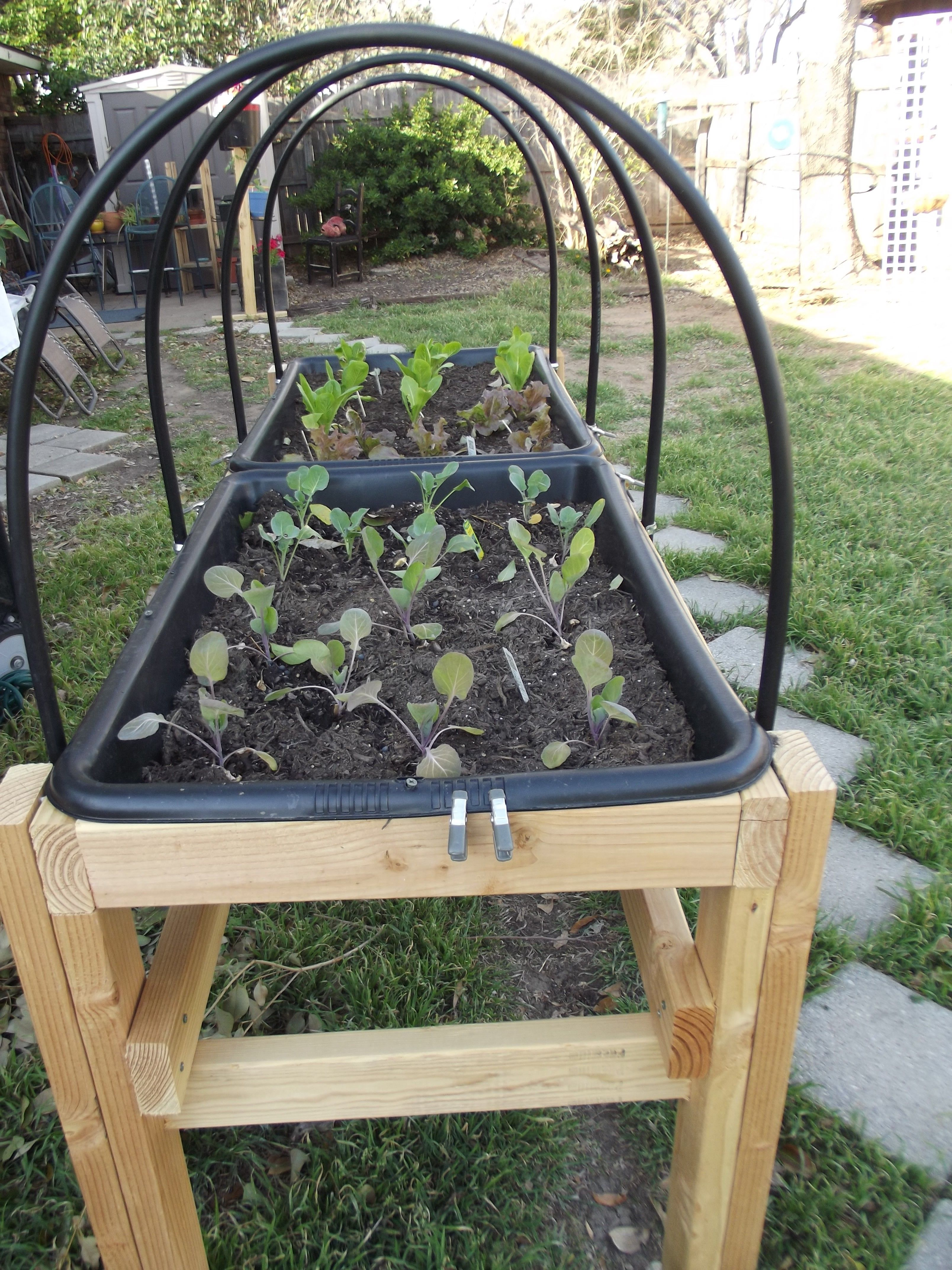 They used 2 cement mixing tubs ($13 each) in this raised bed ... Raised Bed Greenhouse Table Design on raised bed aquaponics, raised bed plans, raised bed greenhouse growing, raised bed kits,