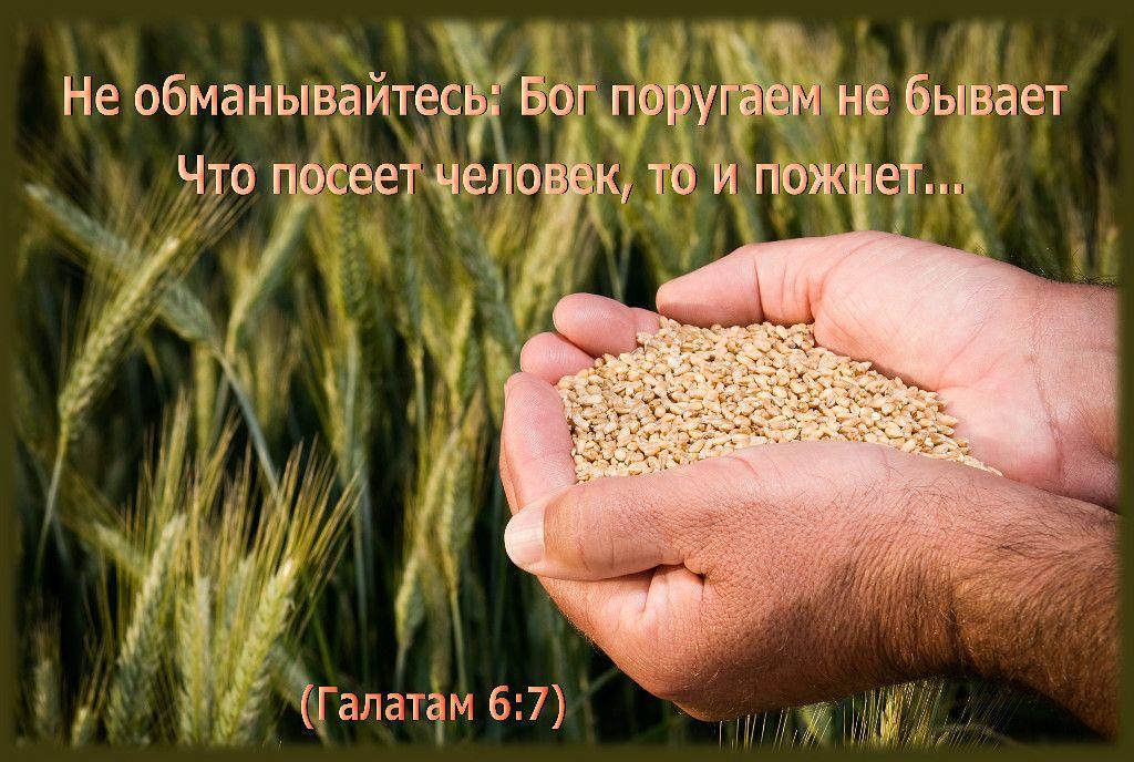 Жатва картинки библейские