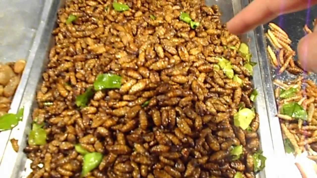 Check out my channel for lots more videos of thailand thai food check out my channel for lots more videos of thailand thai food markets street food and recipes a night market in thailand selling edible bugs forumfinder Images