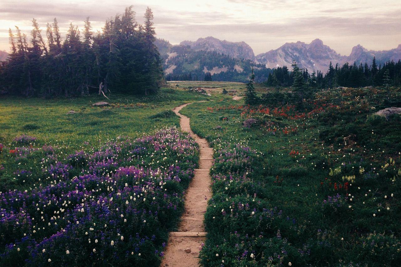 Oregon Dreaming