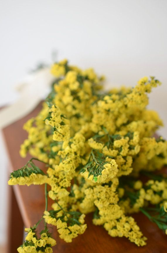 Yellow statice bunch yellow dried statice yellow wedding yellow yellow statice bunch yellow dried statice yellow wedding yellow dried flowers mightylinksfo