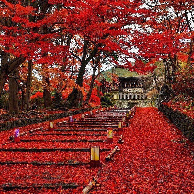 """BD Bucket List #596- Kyoto, Japan (by @tak440224)"" Photo taken by @jeremyjauncey on Instagram, pinned via the InstaPin iOS App! http://www.instapinapp.com (08/03/2015)"