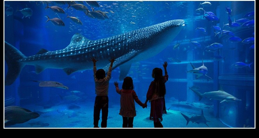 Kaiyukan Aquarium, Osaka in 2020 | Animal species, Osaka ...