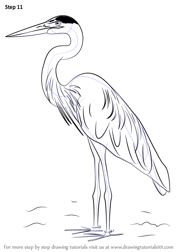 Learn How To Draw A Great Blue Heron Birds Step By Drawing Tutorials