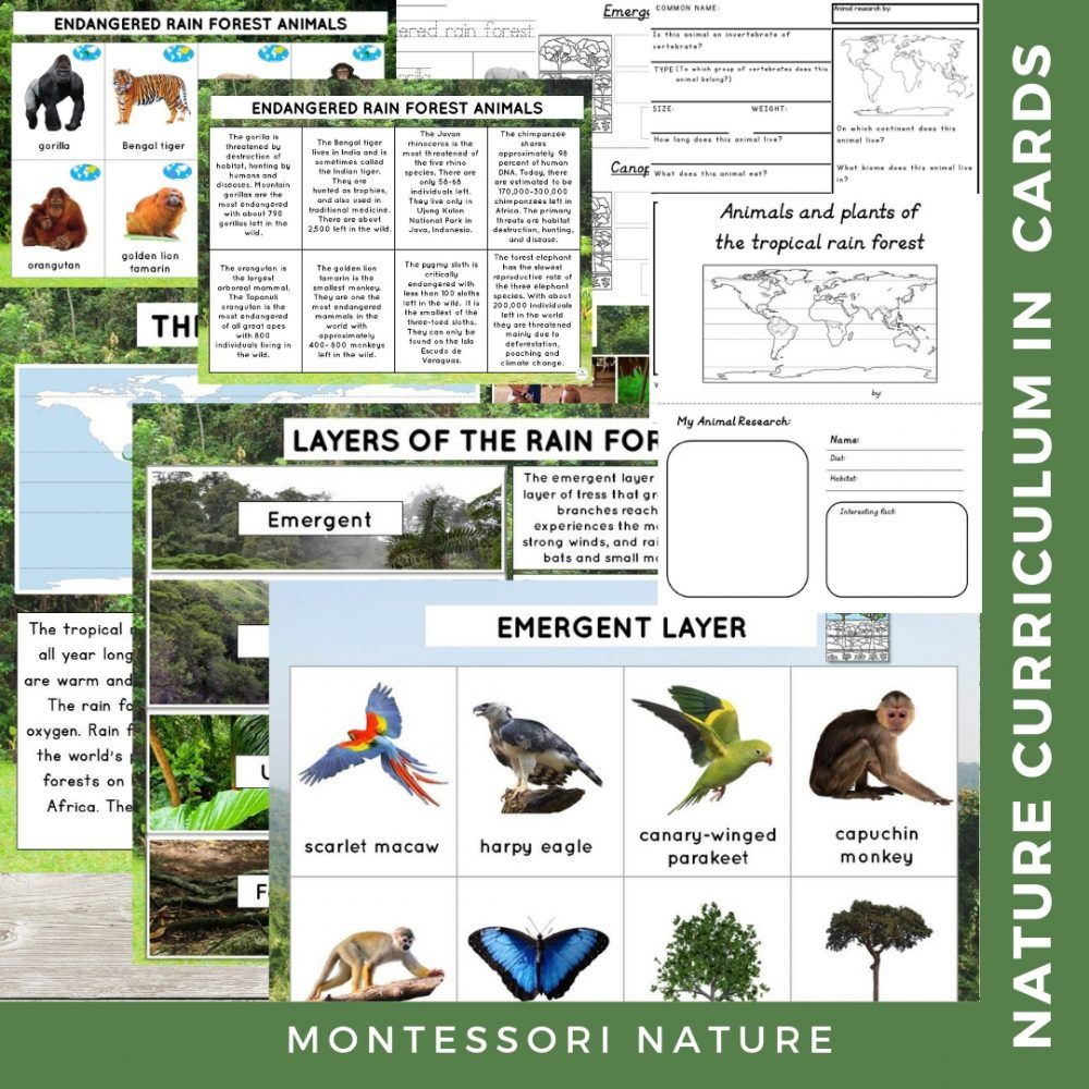 Tropical Rain Forest Biome Nature Curriculum in Cards