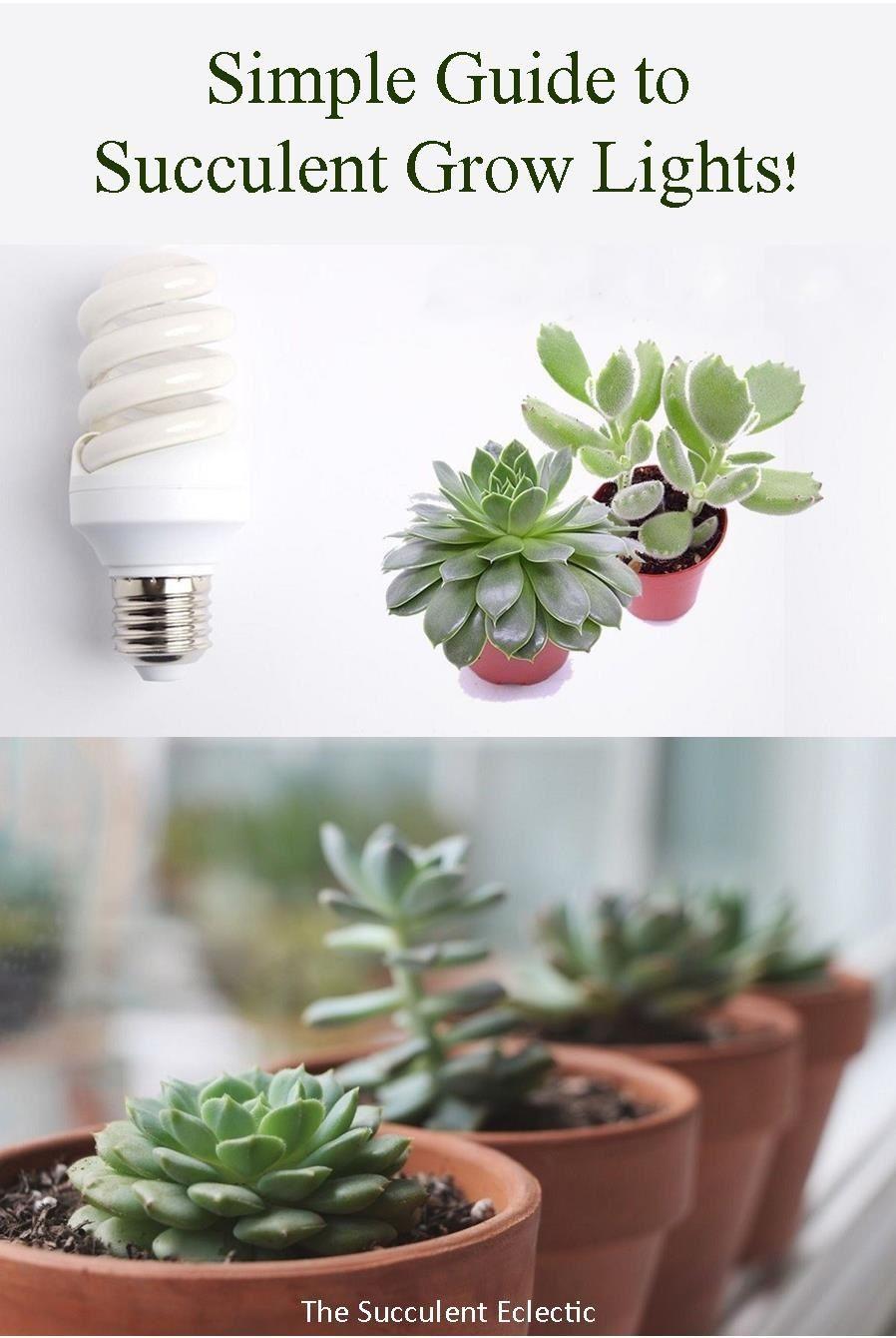 Grow Lights For Succulents In 2020 Grow Lights Succulents Succulent Planter Diy
