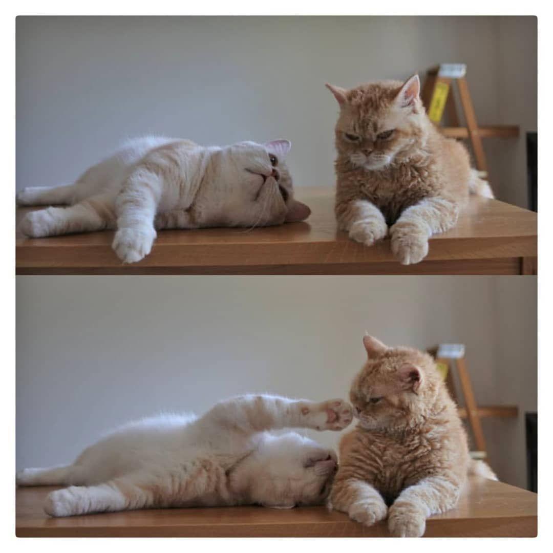 Dr Catdog Chat Chien Animeaux Nature Dog Spa Sauvage Chats Adorables Jolis Chats Fond D Ecran Mignon Chat