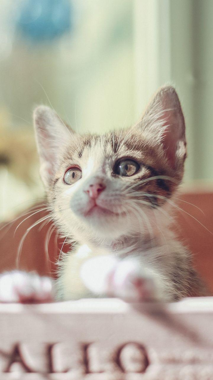720x1280 Wallpaper Cute Kitten Baby Cat Pet In Box Whacky Cool