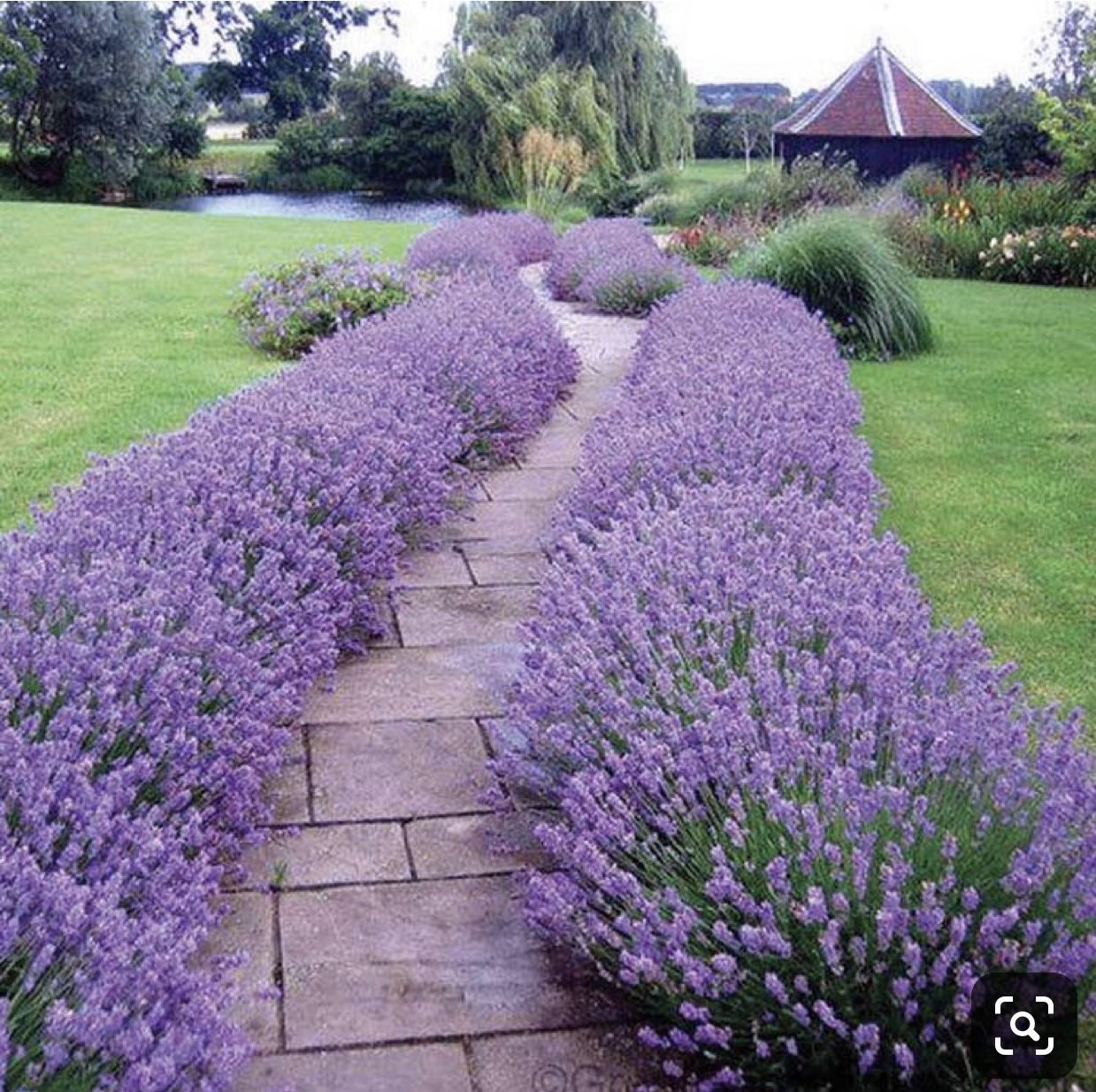 Pin By Sara Mcmahon On Landscaping In 2020 Flower Garden Design Modern Garden Design Lavender Hidcote
