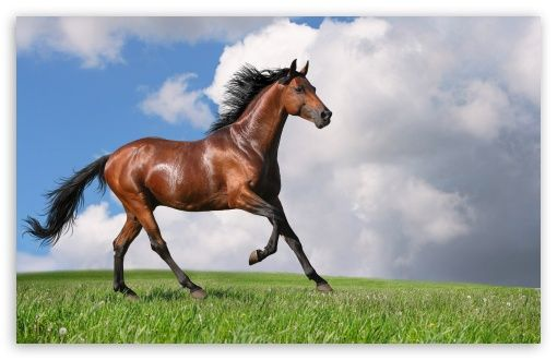 Running Horse Hd Desktop Wallpaper High Definition Fullscreen Mobile Horse Wallpaper Beautiful Horses Horse Pictures